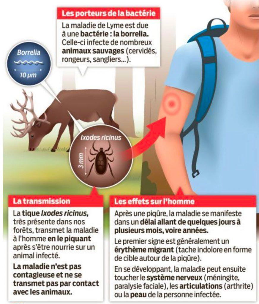 Brochure expliquant la transmission de la maladie de Lyme à l'homme et ses effets
